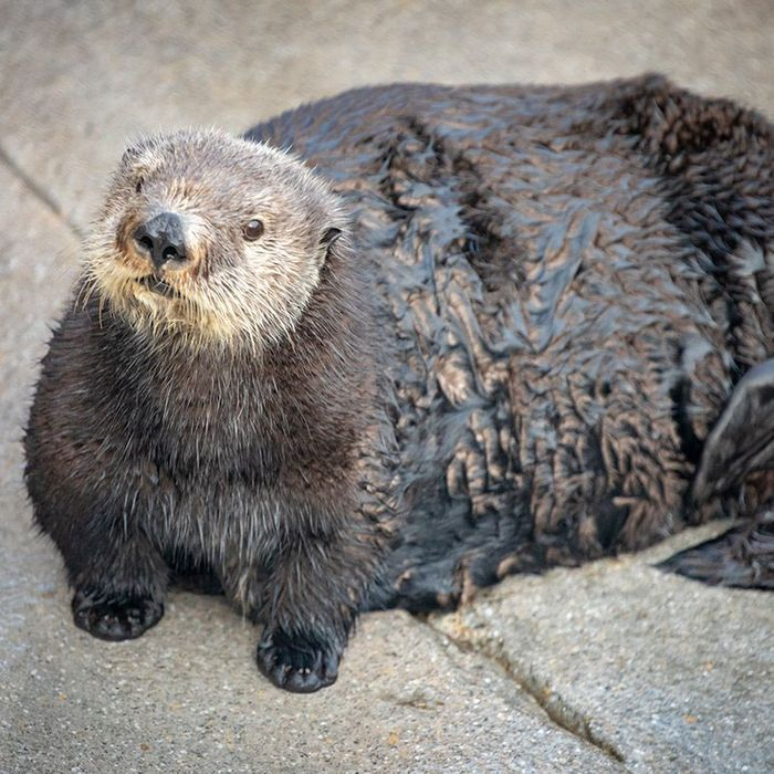 Image result for sea otter monterey
