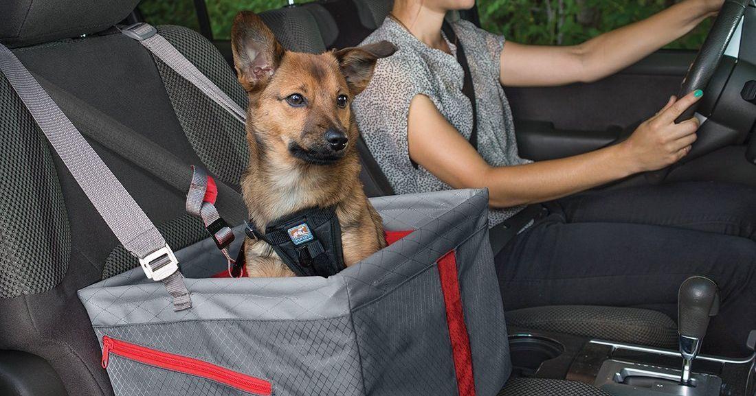 https://pyxis.nymag.com/v1/imgs/584/939/141e43dd0aa3d90fa7b5f3331707713060-19-dog-car-seats-lede.2x.rsocial.w600.jpg