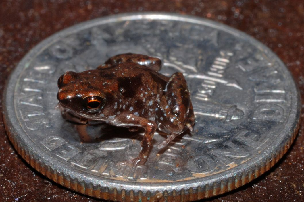 The frogs are known to be very territorial with their dimes, which they prize above all other coinage.