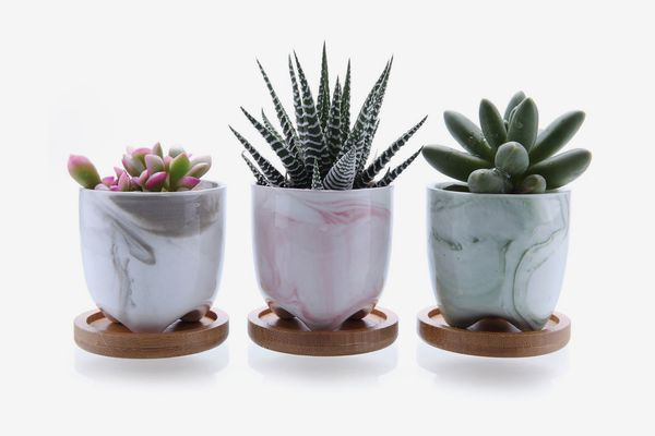 T4U 2.25-inch Ice Cream Plant Pots With Bamboo Trays (Set of 3)