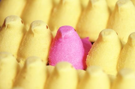 01 Aug 2001 --- Pink Peep --- Image by ? Craig Tuttle/Corbis