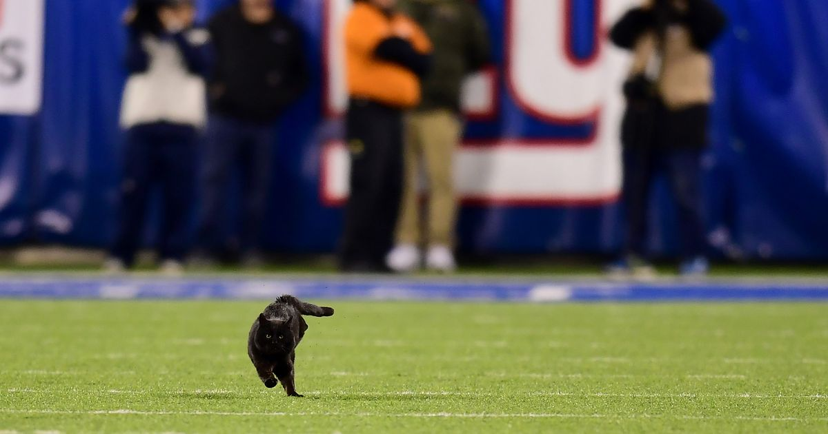 And a Cat Runs Into the End Zone!