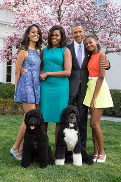 Two influential adults, two teens they live with, two fun dogs in formalwear