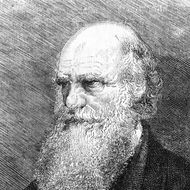 "TO GO WITH THE STORY IN FRENCH BY BORIS CAMBRELENG: "" BICENTENAIRE DE CHARLES DARWIN, FONDATEUR DE LA BIOLOGIE MODERNE"" - This undated engraving released on February 10, 1959 showing English naturalist Charles Darwin ( 1809-1882), father of the theory of evolution meaning that all species of life have evolved over time from common ancestors through the process he called natural selection. AFP PHOTO  (Photo credit should read -/AFP/Getty Images)"