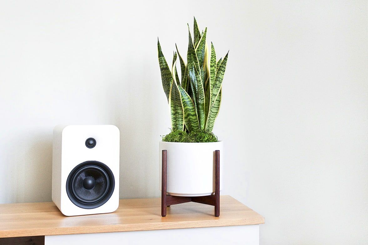 We Ordered 9 Snake Plants for Our Office to Find the Best Places to Buy Houseplants Online