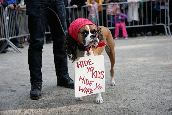 Photo Jim Kiernan & Dogs Looking Depressed in Their Halloween Costumes -- NYMag