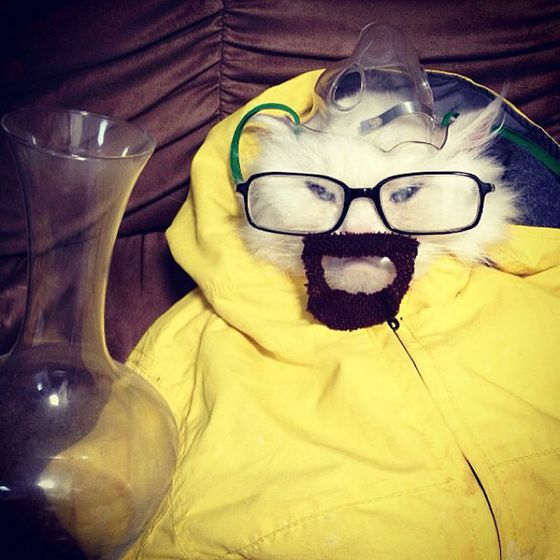 funny cat dressed up - photo #10