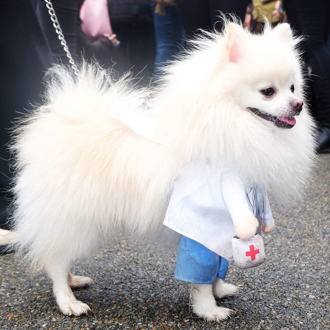 25 dogs from the tompkins square halloween dog parade