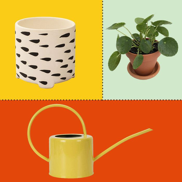 Best Plants, Misters, Watering Cans, and Plant Stands 2019 on succulents string of pearls, golf string of pearls, flower string of pearls,