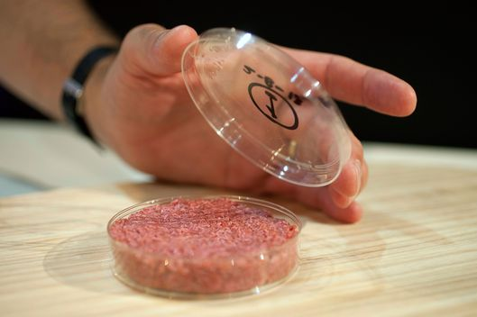 05 Aug 2013, London, England, UK --- Professor Mark Post shows the world's first lab-grown beef burger during a launch event in west London August 5, 2013. The in-vitro burger, cultured from cattle stem cells, the first example of what its creator says could provide an answer to global food shortages and help combat climate change, was fried in a pan and tasted by two volunteers. The burger is the result of years of research by Post, a vascular biologist at the University of Maastricht, who is working to show how meat grown in petri dishes might one day be a true alternative to meat from livestock.The meat in the burger has been made by knitting together around 20,000 strands of protein that has been cultured from cattle stem cells in Post's lab. REUTERS/David Parry/pool (BRITAIN - Tags: ANIMALS ENVIRONMENT FOOD SCIENCE TECHNOLOGY) FOR EDITORIAL USE ONLY. NOT FOR SALE FOR MARKETING OR ADVERTISING CA --- Image by ? POOL/Reuters/Corbis