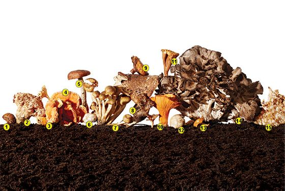 Urban Mushroom Hunters Hit Pay Dirt at South Street Seaport