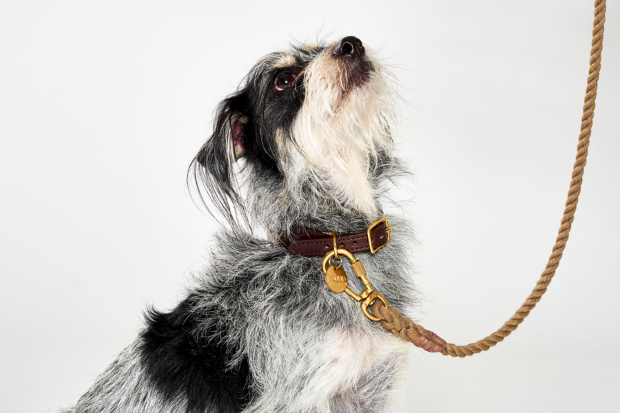 How a Fancy Dog Leash can Keep Your Pet Safe