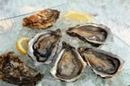 Eat Well: Oyster Happy Hour at Hillside, Sandwiches at Animals, and Meatless Monday at Cookshop