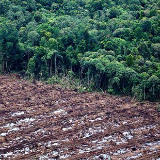 South Sumatra Governor Takes Aerial Tour Deforested Regions