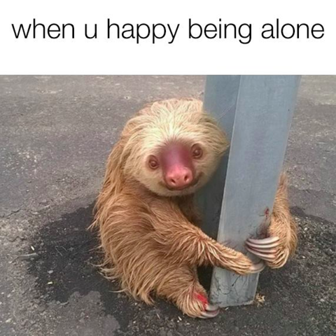 Cops Rescued This Adorable Sloth And Turned Him Into A Meme About Being Alone