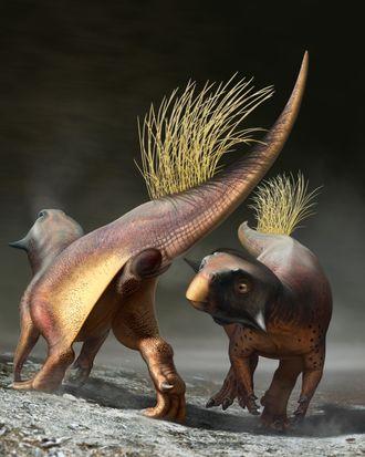 Dinosaur cloaca.