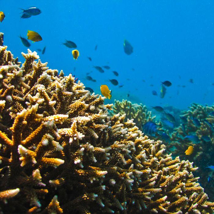 3-D Printing Ceramic Helps Repair Coral Reefs