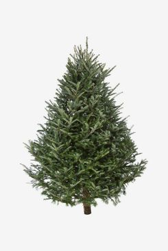 Fresh-Cut Christmas Tree — Fraser Fir
