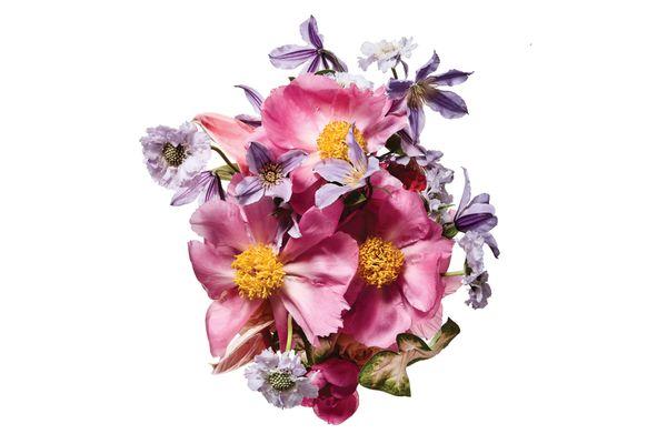 Anthurium, caladium, peony, scabiosa, begonia, clematis, celosia, and garden rose