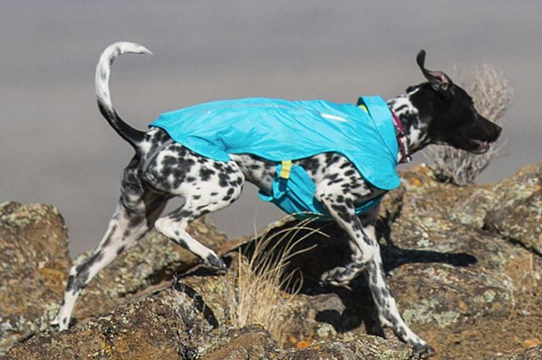 Ruffwear Wind Sprinter