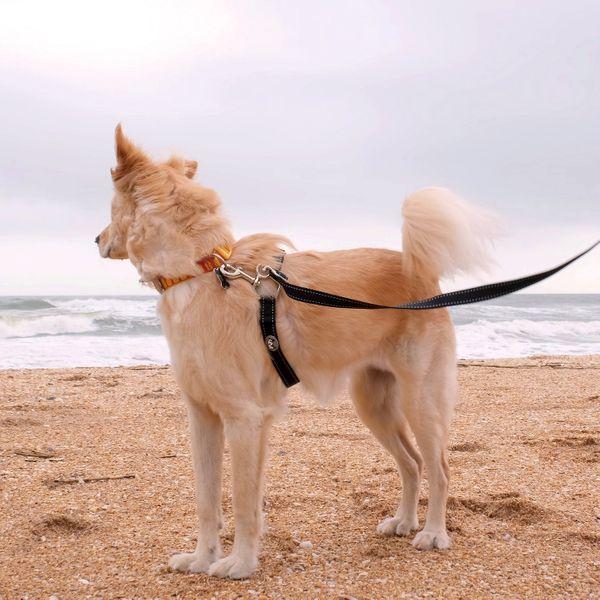 Laisse pour chien en nylon sans traction ThunderLeash