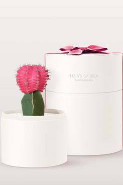 Lula's Garden Valentine's Cacti Garden