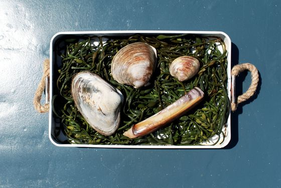 Raw clams are on the menu.
