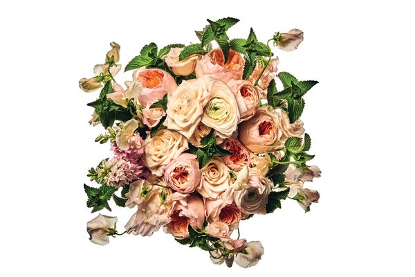 Juliet garden rose, Champagne rose, Clooney Hanoi ranunculus, sweet pea, larkspur, and mint