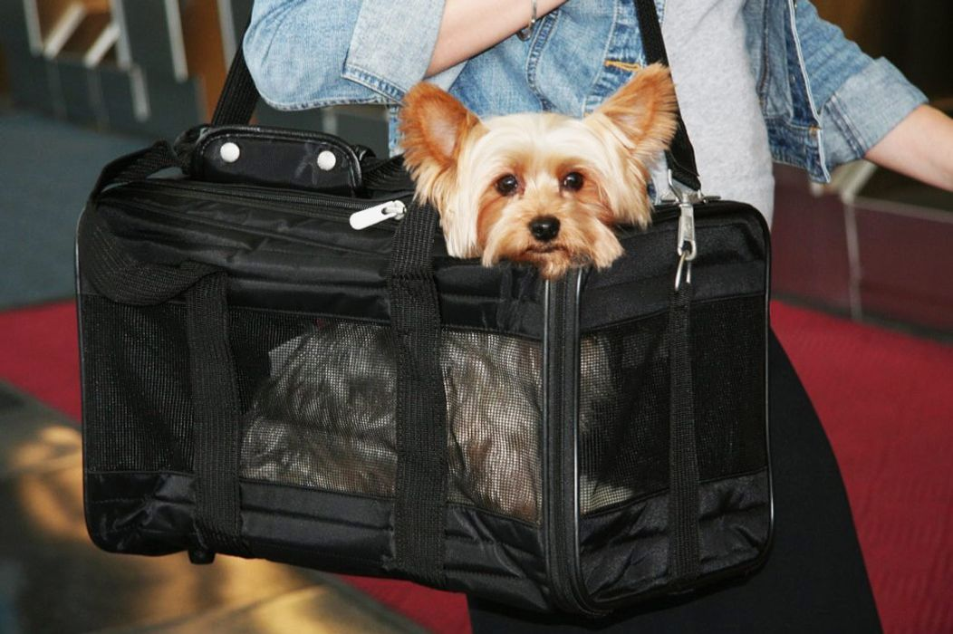 Sherpa Deluxe Pet Carrier — Small