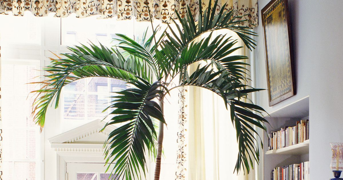 How to Care for Houseplants - Plant Week 2019 Main House Plants Html on house crafts, house stars, house nature, house design, house mites, house flowers, house chemicals, house home, house rodents, house candy, house ferns, house family, house people, house decorations, house cars, house slugs, house fire, house plans, house gifts, house vines,