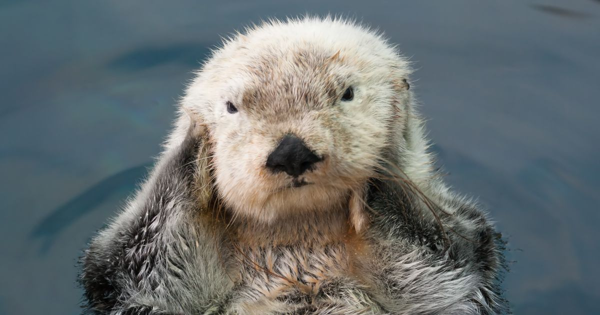 Does This Otter Have a Better Skin-Care Routine Than You?