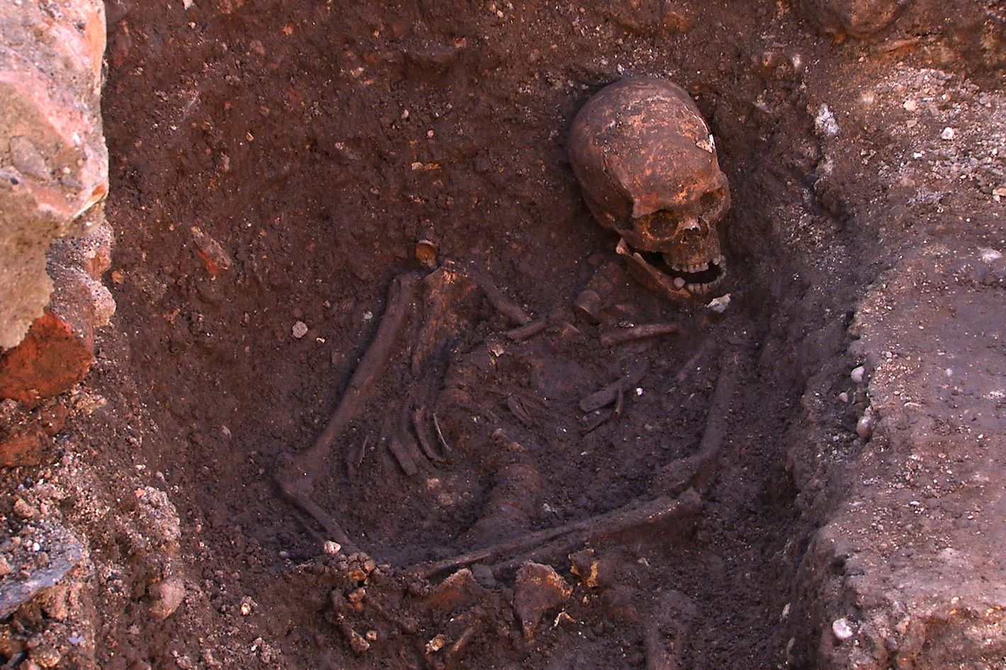 the lovely bones why richard iii s body should be on display