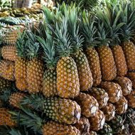 Pineapples Could Be the Secret Weapon in the Fight Against Superbugs