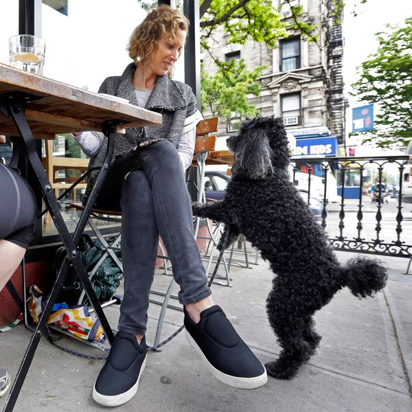 Dogs Are One Step Closer to Infiltrating New York Patios