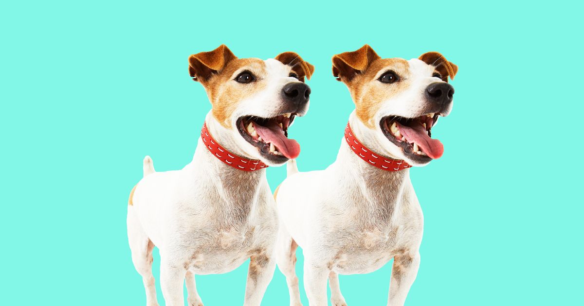 dog as a pet animal essay My pet dog having a pet of your own is one of life's greatest pleasures a pet gives us love and affection that we so deeply desire in our lives among pets the most popular is the dog.