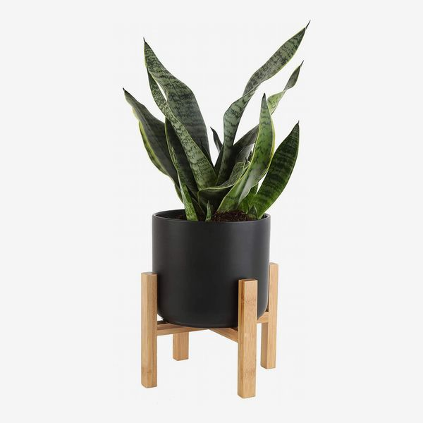 costa farms snake plant with 6.5-inch wide mid-century modern planter - strategist best snake plant