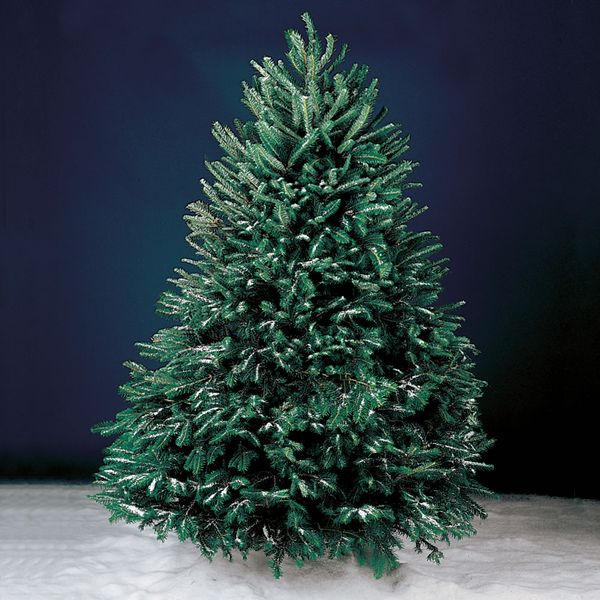 Hammacher Schlemmer Freshly Cut Fraser Fir Tree