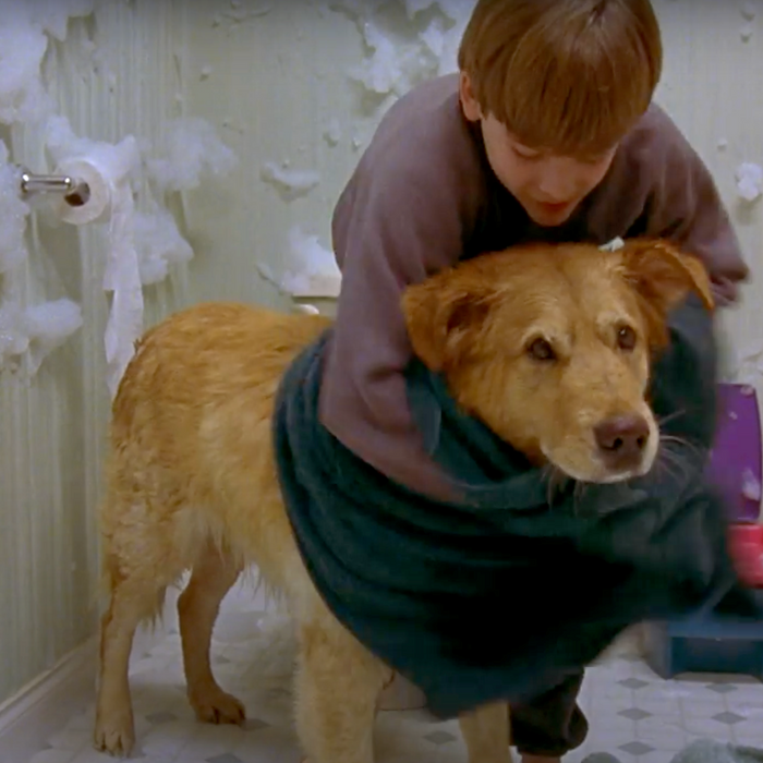 How To Groom A Dog At Home 23 Tips And Products The Strategist New York Magazine
