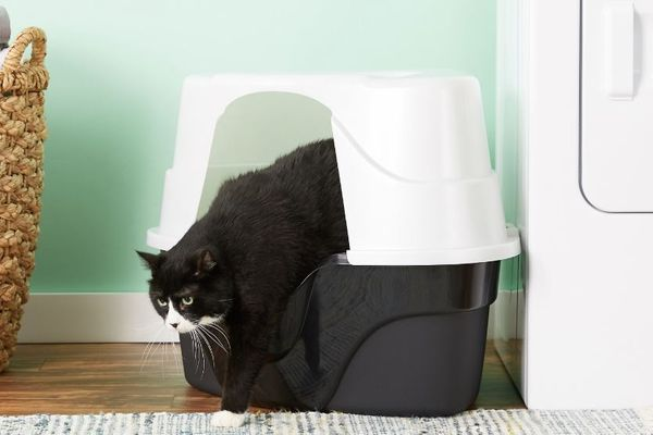 Nature's Miracle Just for Cats Advanced Corner Cat Litter Box