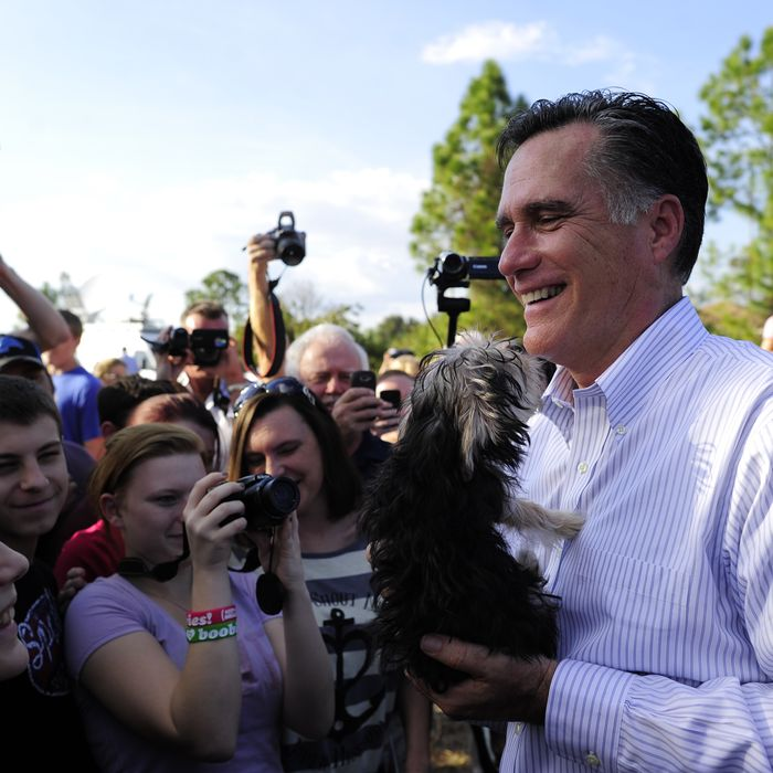 Republican presidential hopeful Mitt Romney holds a small dog handed over by a supporter after speaking at a
