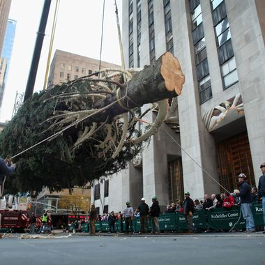 NEW YORK, NY - NOVEMBER 11:  Workers raise the Rockefeller Center Christmas Tree on November 11, 2011 in New York City. This year's tree is a 74-foot Norway Spruce and was cut down November 9 in Mifflinville, Pennsylvania and then moved to Manhattan on a flatbed trailer. The lighting of the tree is the traditional start to the holiday season in New York City.  (Photo by Spencer Platt/Getty Images)