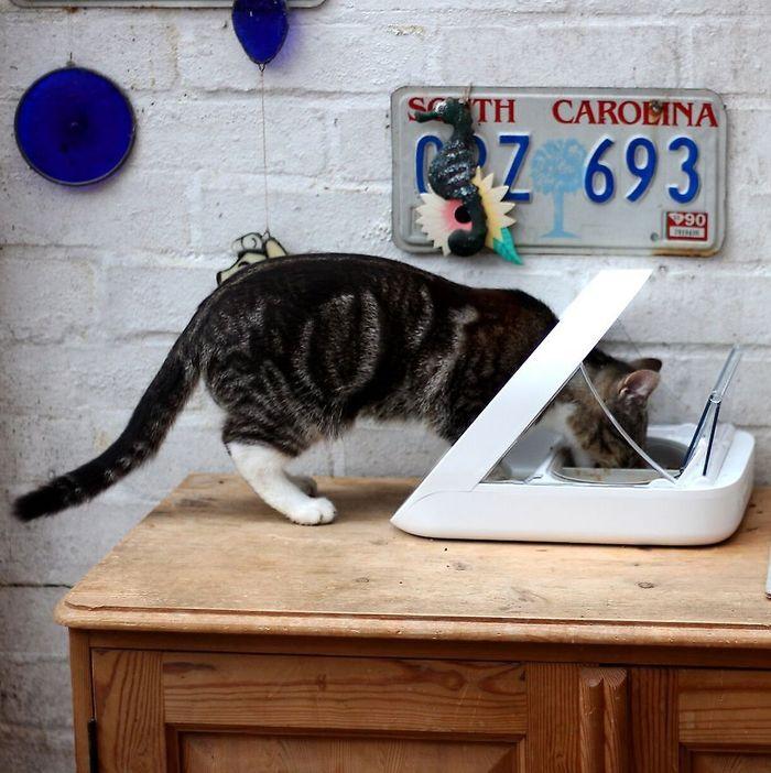 Sureflap Surefeed Microchip Pet Feeder Multi Cat Stainless Steel Bowl Value Pack Cat Supplies