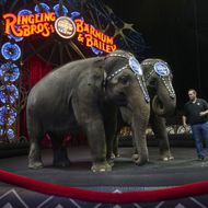 US-ENTERTAINMENT-CIRCUS-ELEPHANTS
