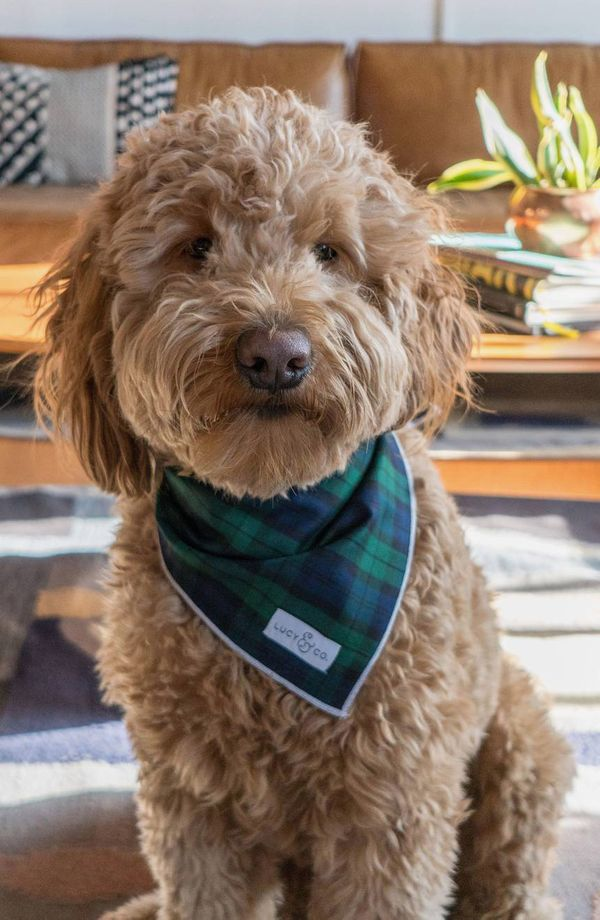 Lucy and Co. the Arlo Plaid Dog Bandana
