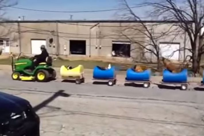 The dog train in action.