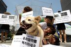 Protesters Dog South Korea's Meat Choice
