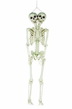Fun Express Two-Headed Life-Size Human Skeleton