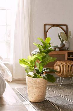 Fiddle-leaf Potted Faux Plant