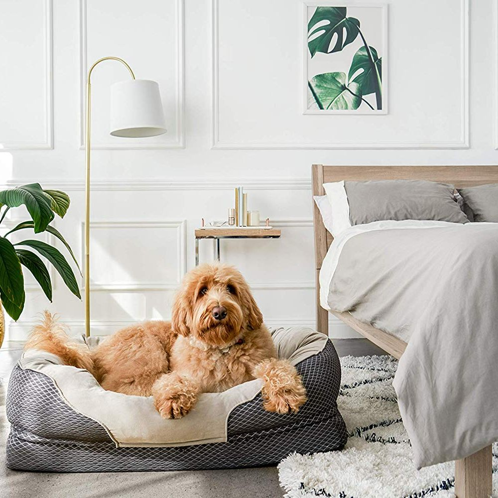 17 Best Dog Beds 2020 The Strategist