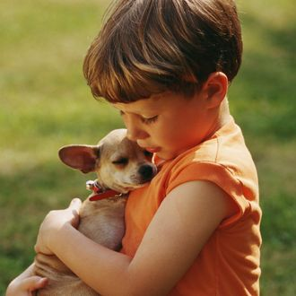 Boy (5-7) embracing chihuahua, close-up